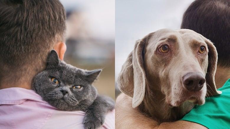 cat-people-dog-people